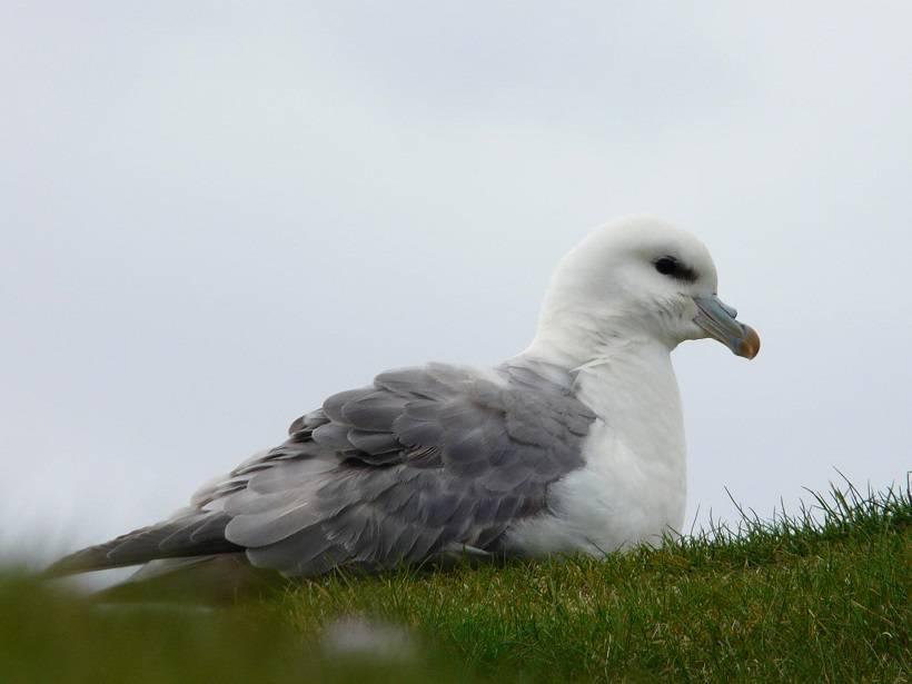 shetland 014