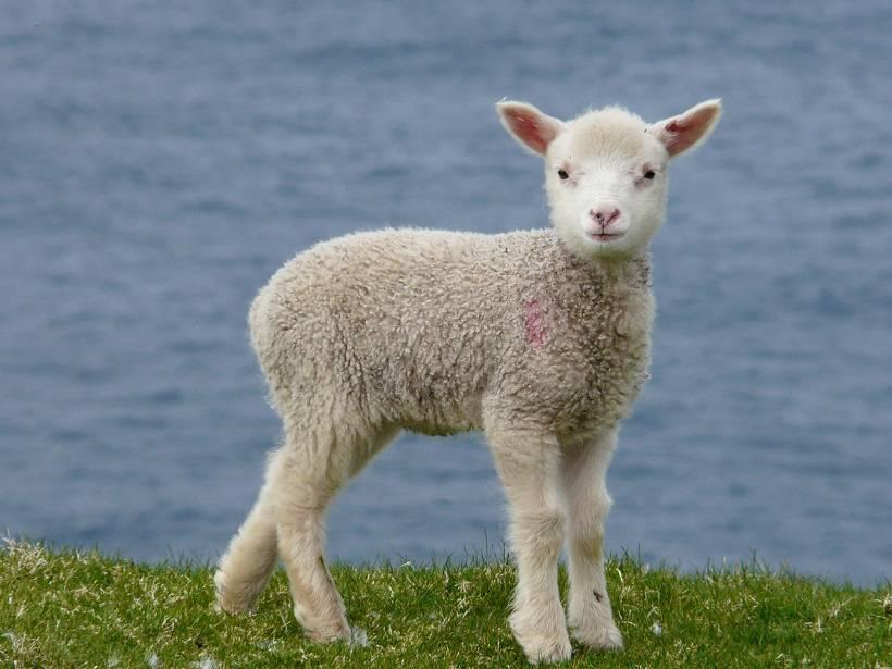 shetland 043