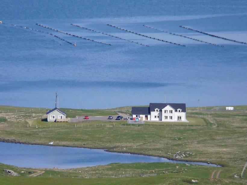 shetland 053