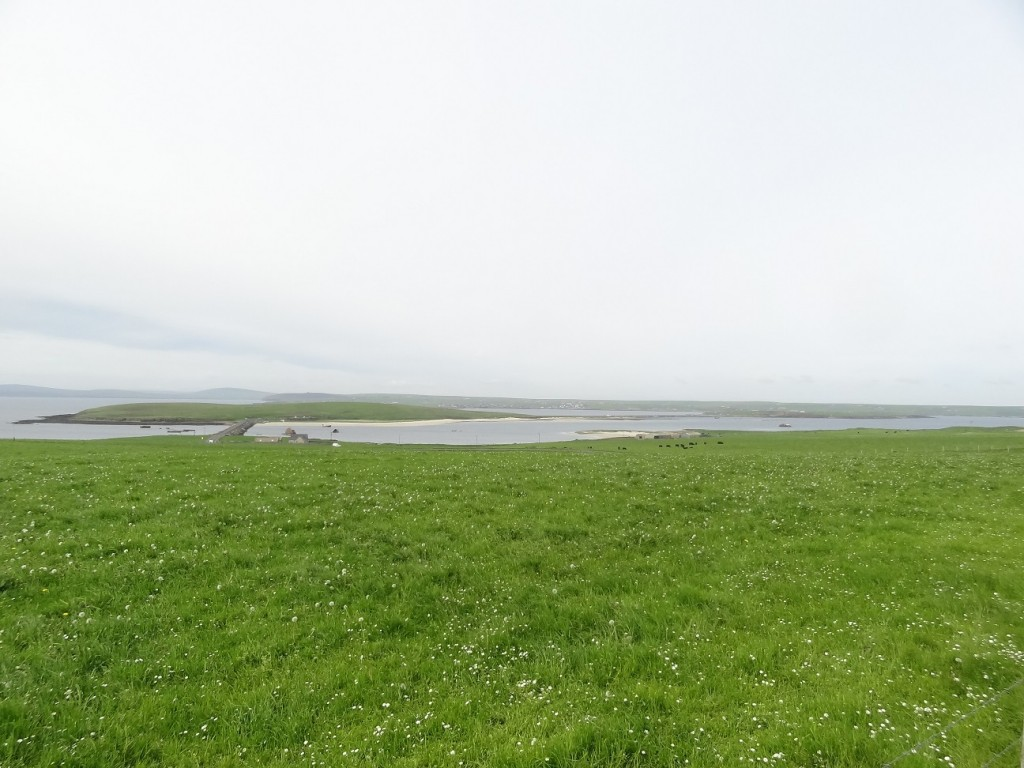 orkney 077