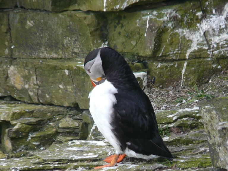 Orkney 2015 (624)